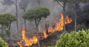 غابات حرائق