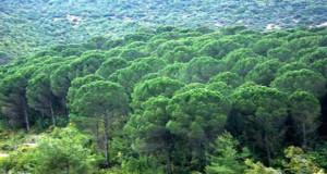 غابات وحراج