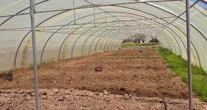 زراعة محمية